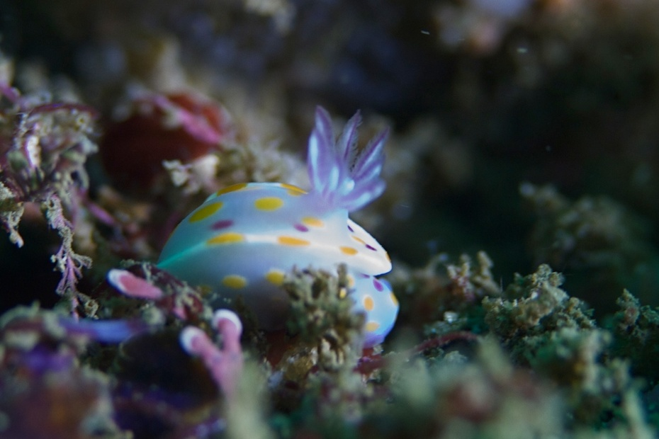 Tiny nudibranch