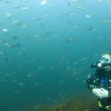 Rebreather in a school of fish